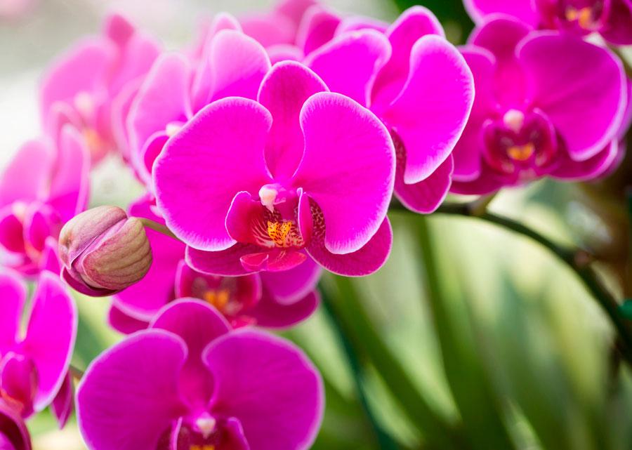Картинки по запросу орхідея