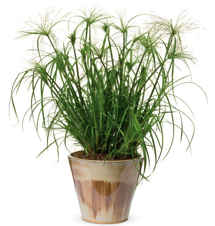 Краткое описание выращивания