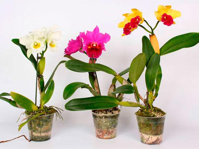 Комнатные растения в квартире фото