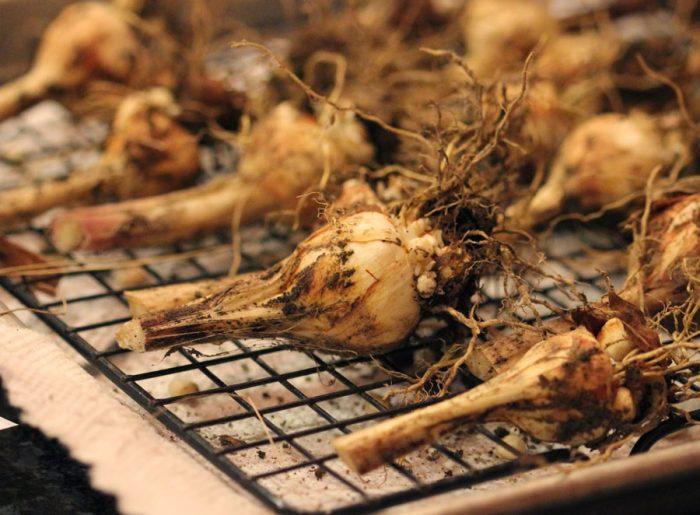 Основные правила хранения луковиц