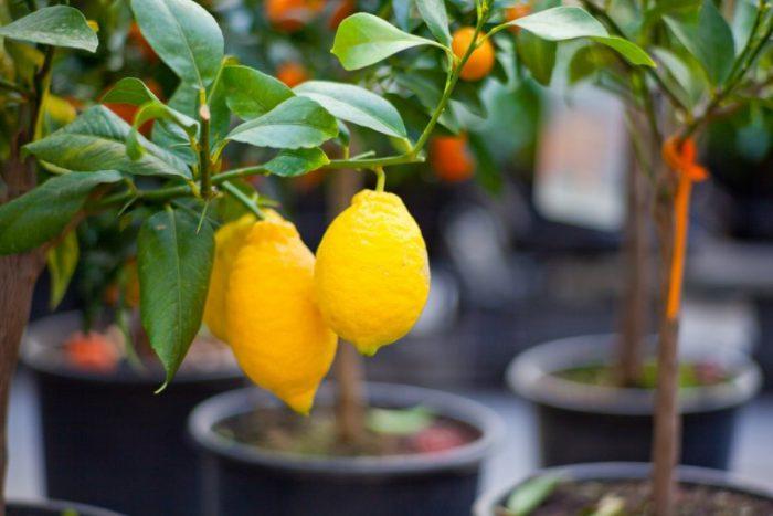 Правила выращивания плодов