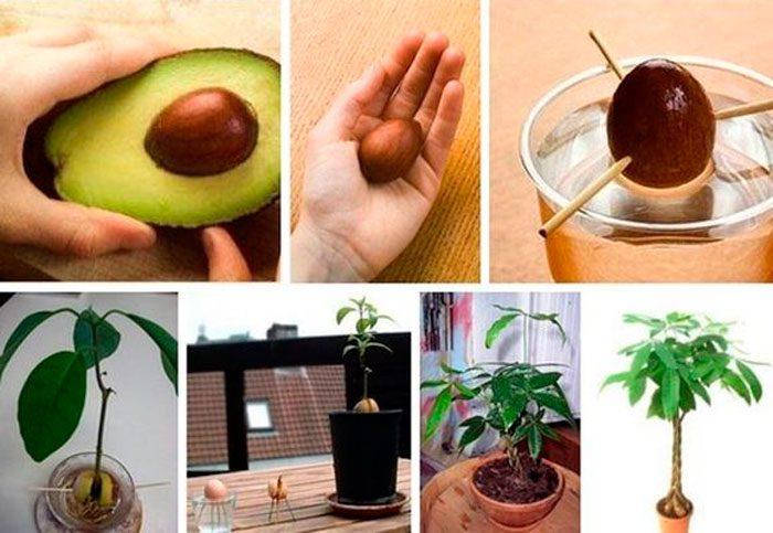 Авокадо: как его едят правильные рецепты чистки и с чем есть 15