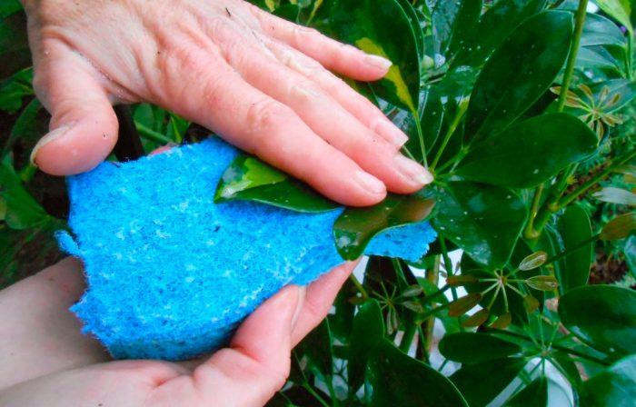 Обмывание листвы водой