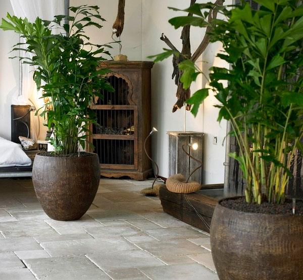 Уход за пальмой кариота в домашних условиях