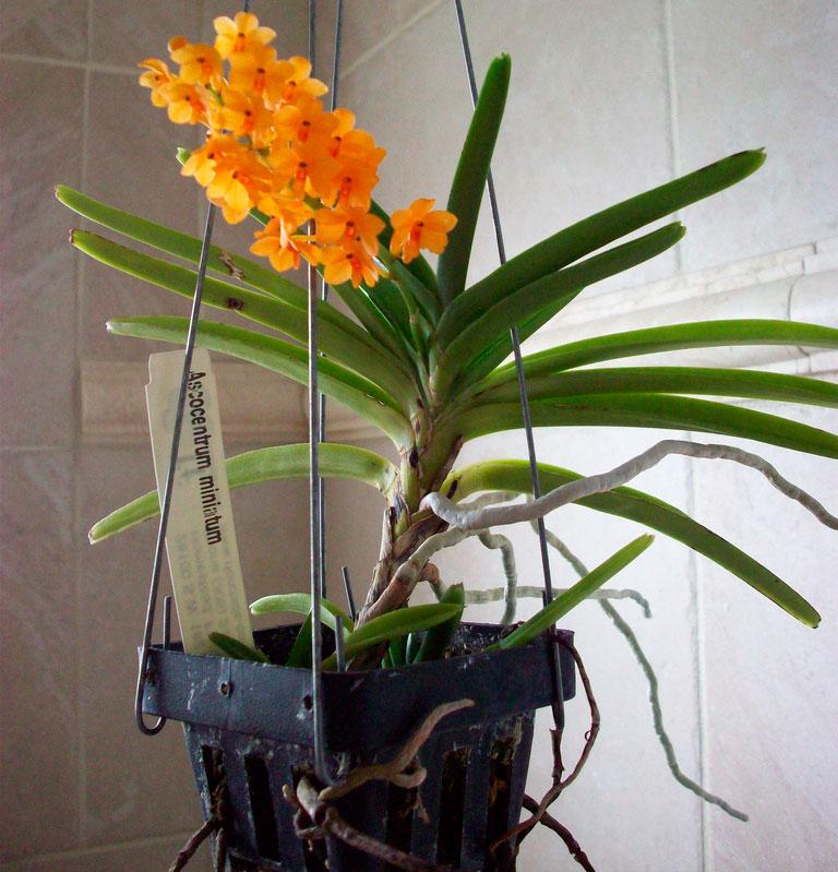 видео уход за орхидеей после цветения в домашних условиях