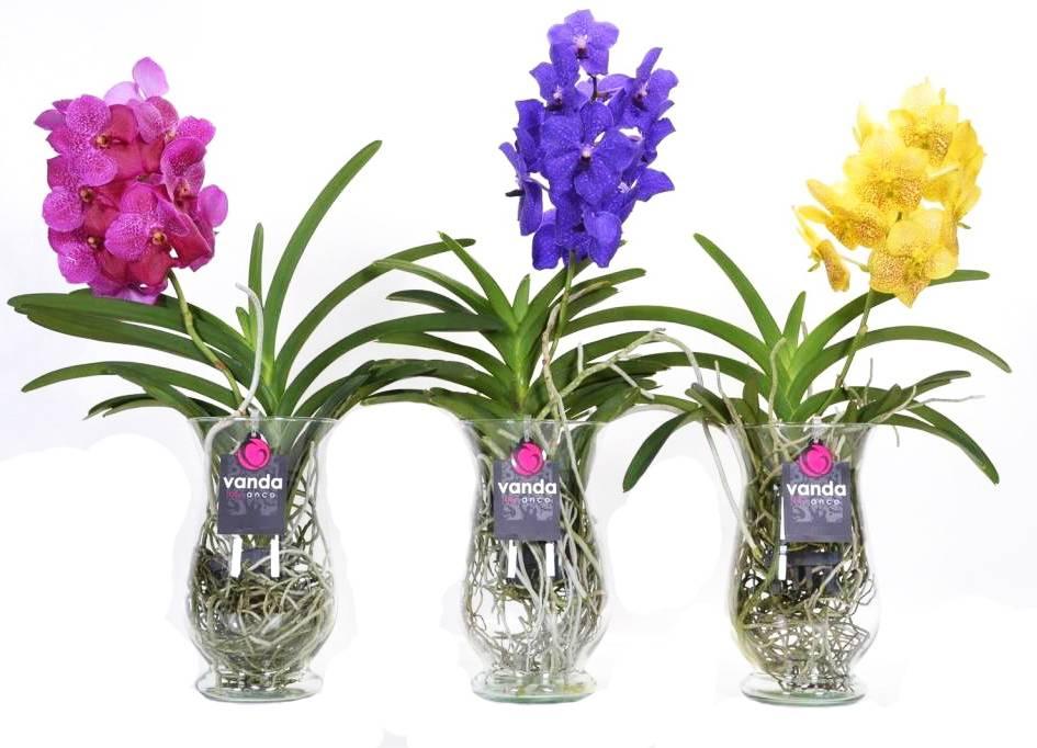 Комнатные цветы суккуленты каталог с фотографиями и названиями