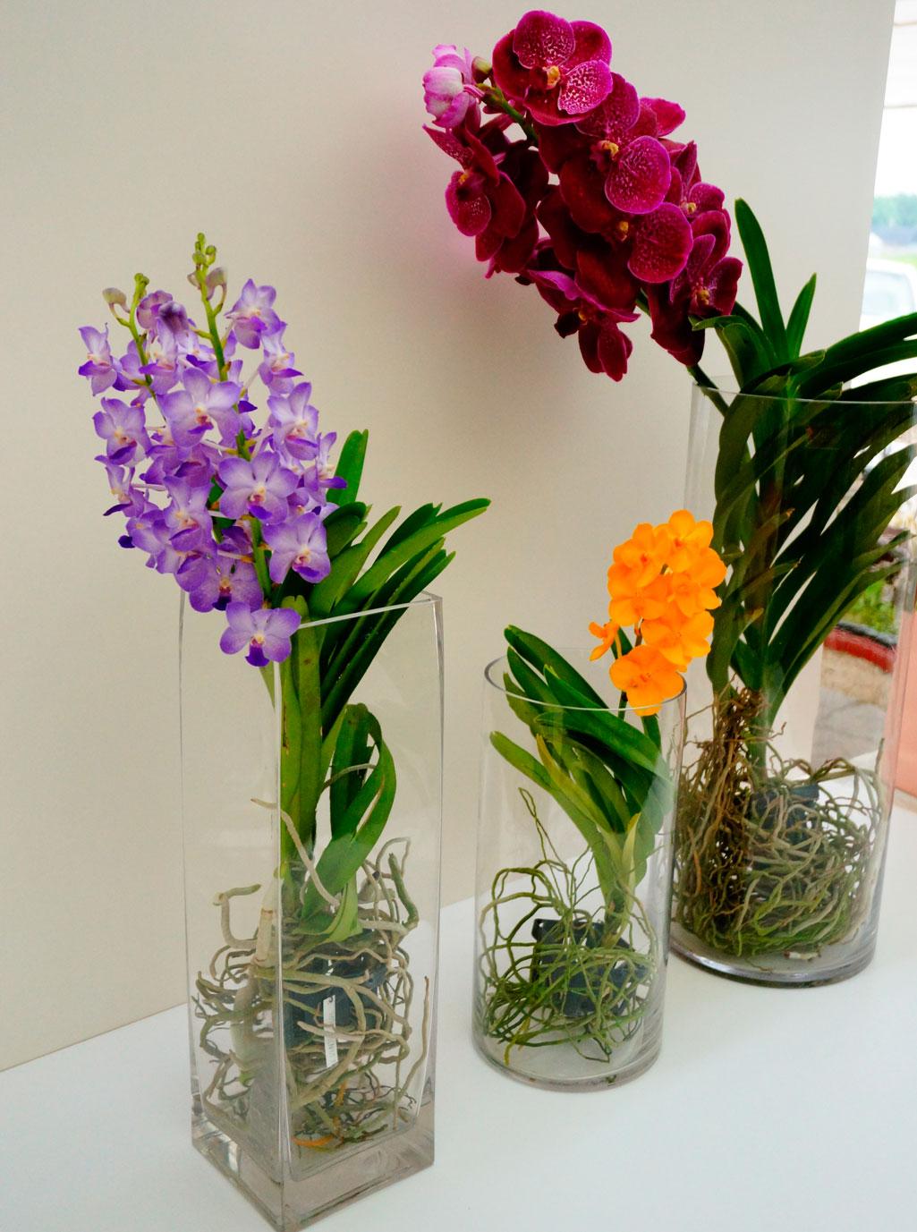 Ванда орхидея уход