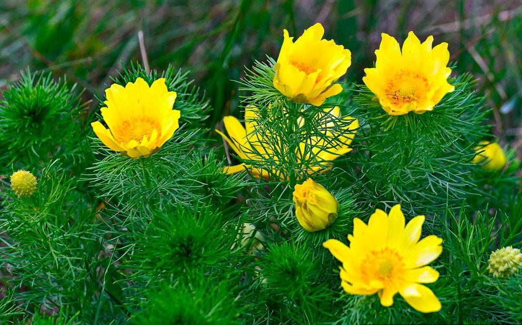 фото многолетних цветов каталог с фото