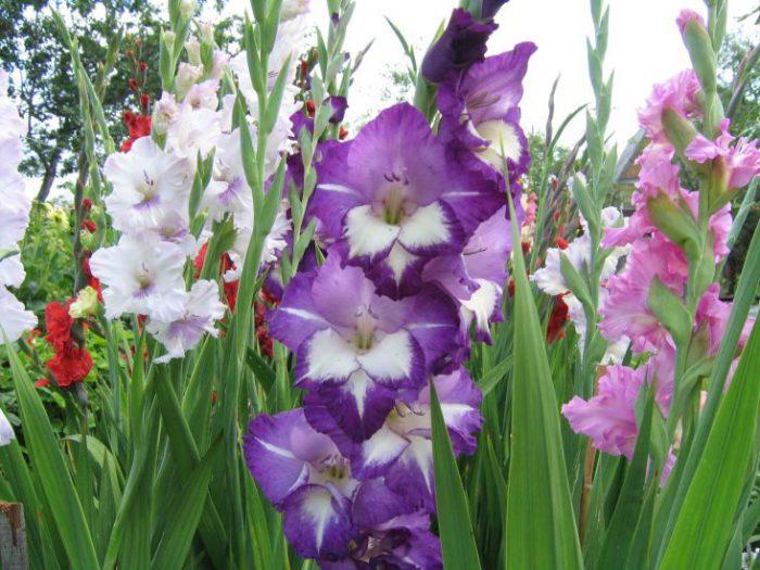 Цветы на даче многолетники фото и названия