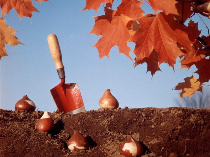Осенняя посадка