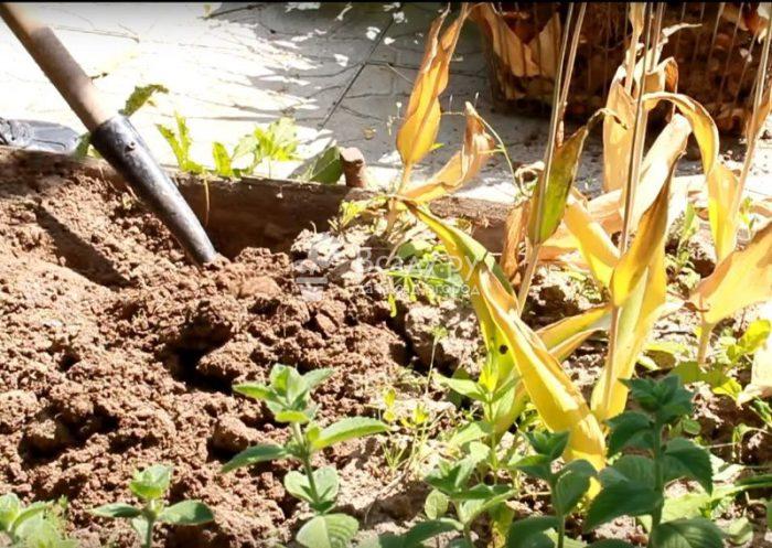 Уход за отцветшим растением