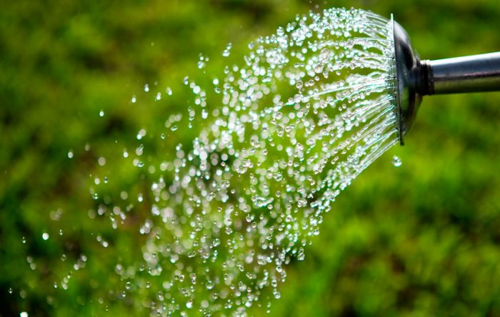 Как правильно поливать