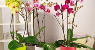Как ухаживать за домашней орхидеей