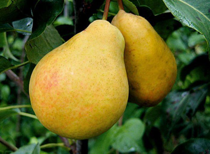 «Лимонка»