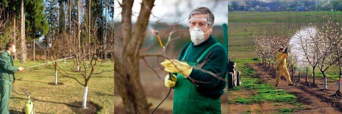 Чем опрыскивать деревья весной