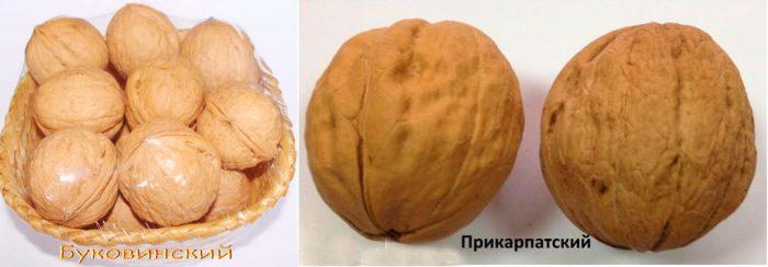 Украинские сорта