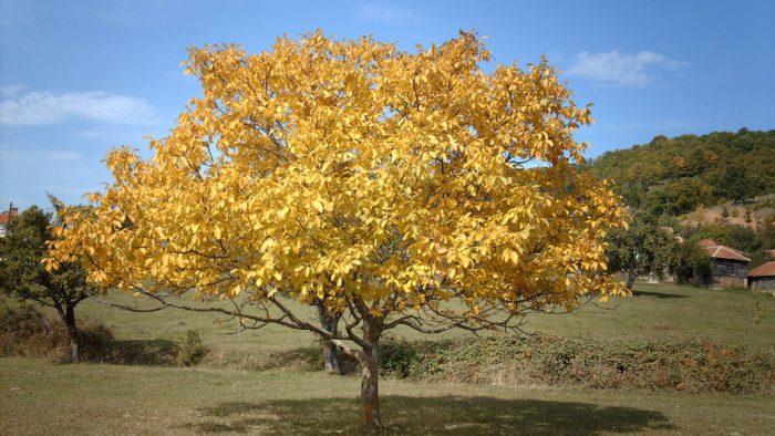 Осенняя обрезка
