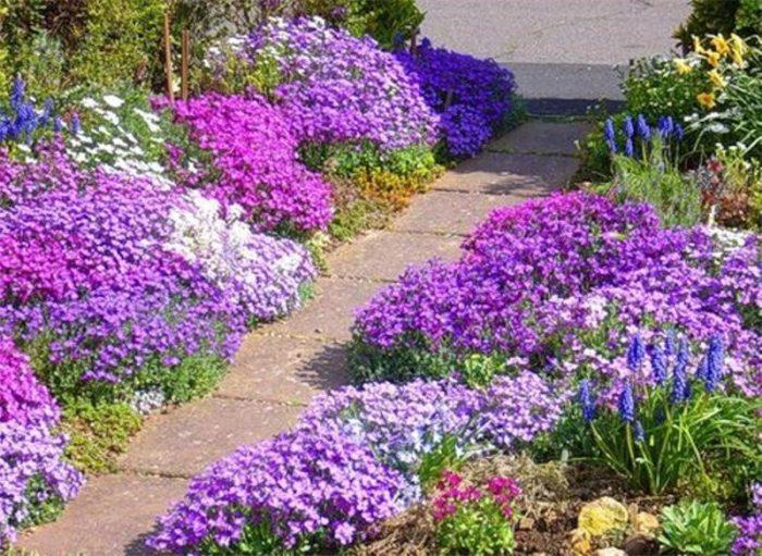 Как ухаживать в саду