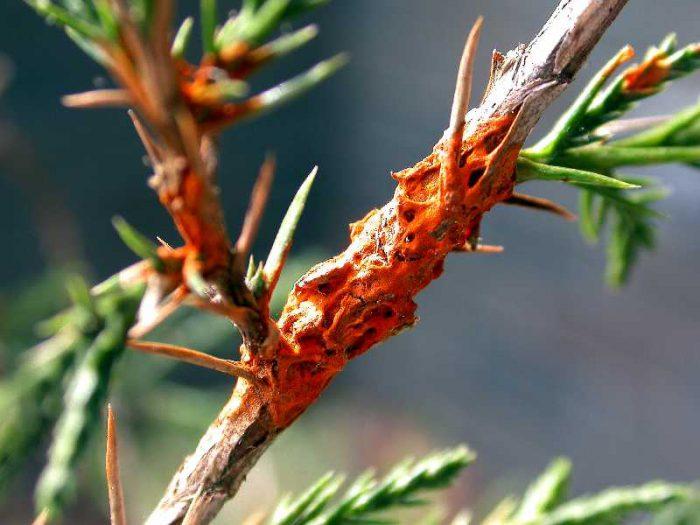 Вредные насекомые и заболевания