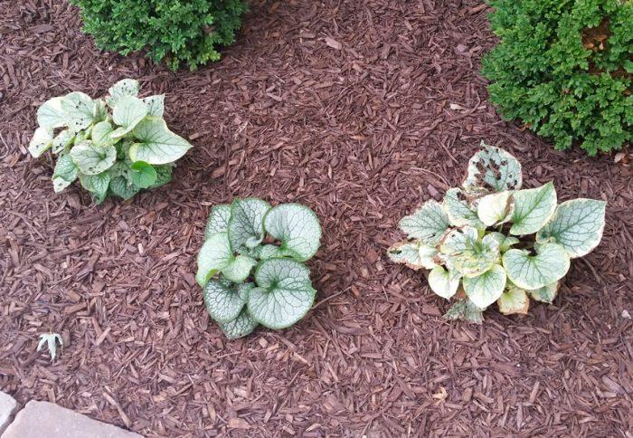 Как правильно посадить