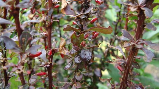 Заболевания и вредные насекомые
