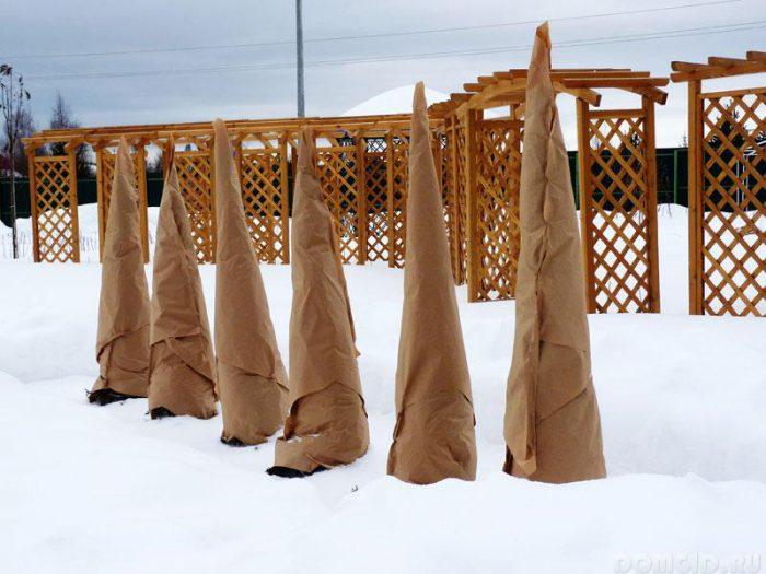 Кипарисовик зимой