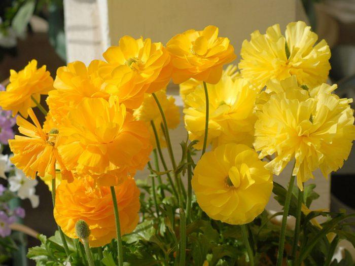 Лютики после цветения