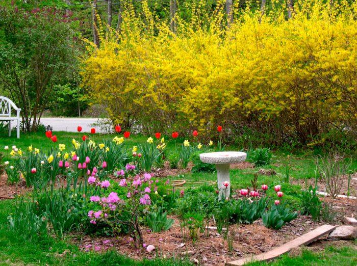уход в саду