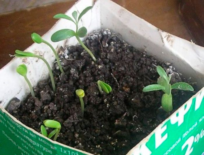 Как вырастить из семян
