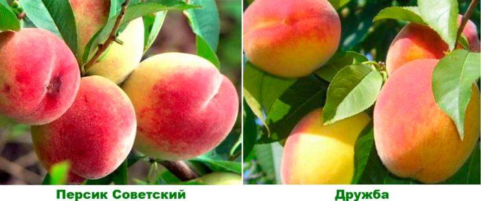 Средние сорта персика