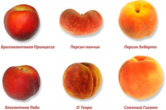 Сорта персика с описанием