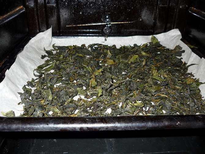 Условия ферментации иван-чая
