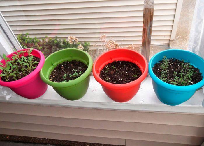 Выращивание дайкона из семян
