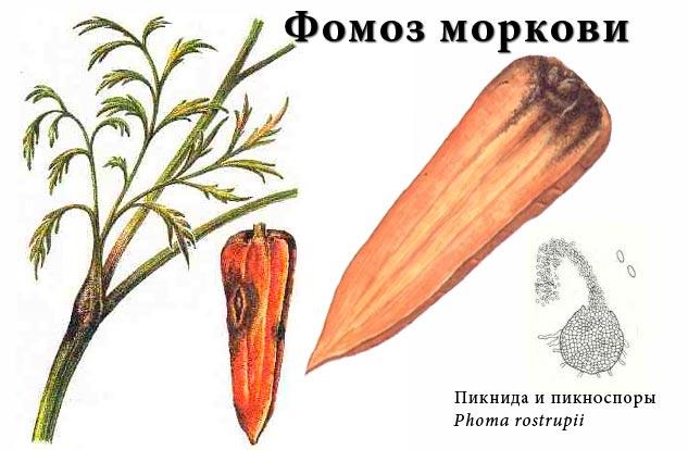 Фомоз