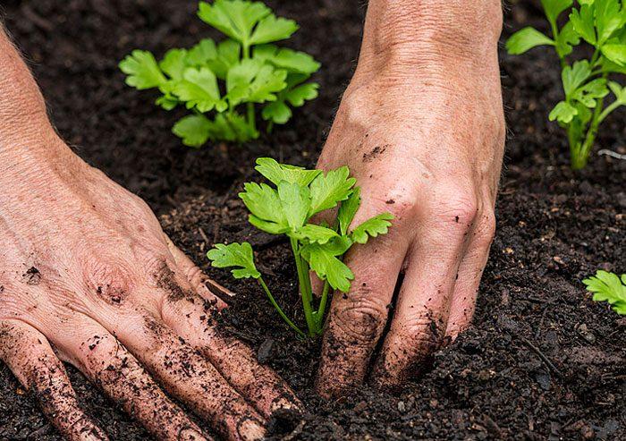 Подходящая почва