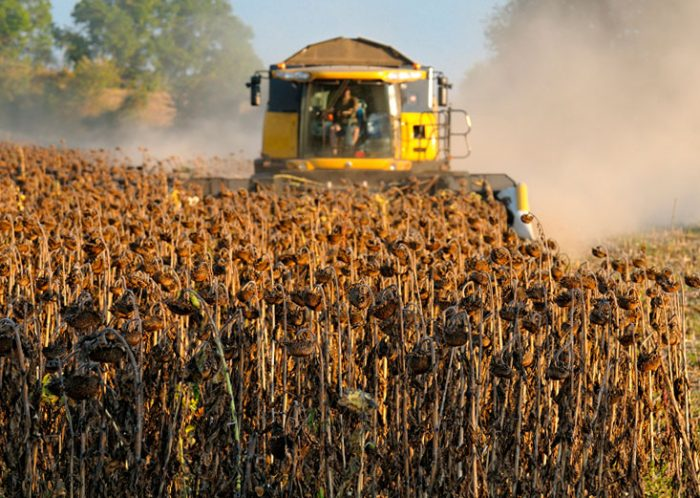 Основные правила уборки урожая