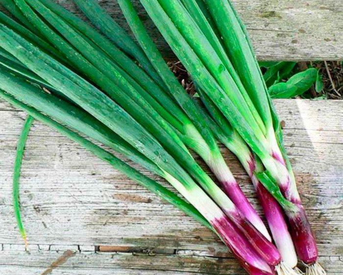 Виды и сорта лука-батуна
