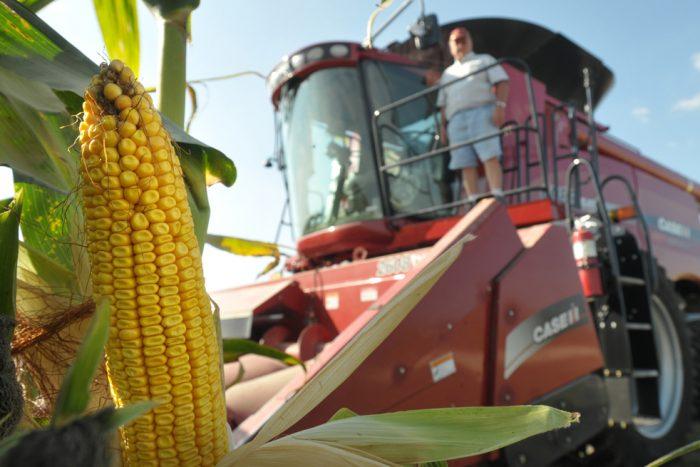 Уборка и хранение кукурузы