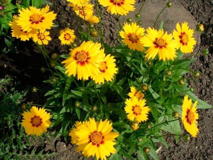 Правила высадки рассады в сад