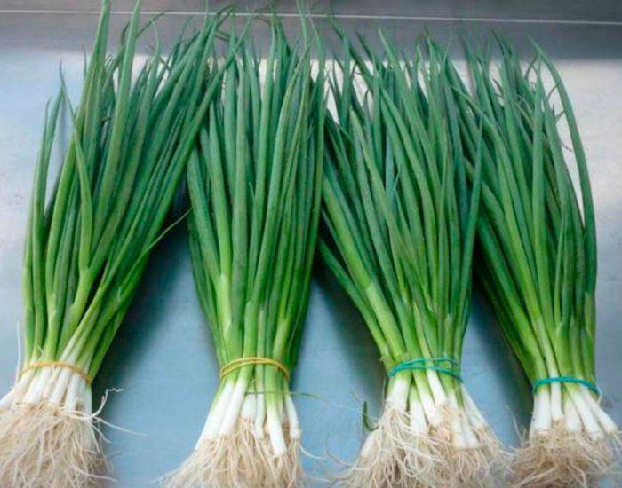 Сорта лука на перо (зелень)