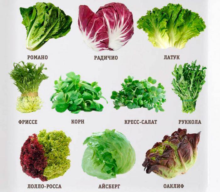 Виды и сорта салата