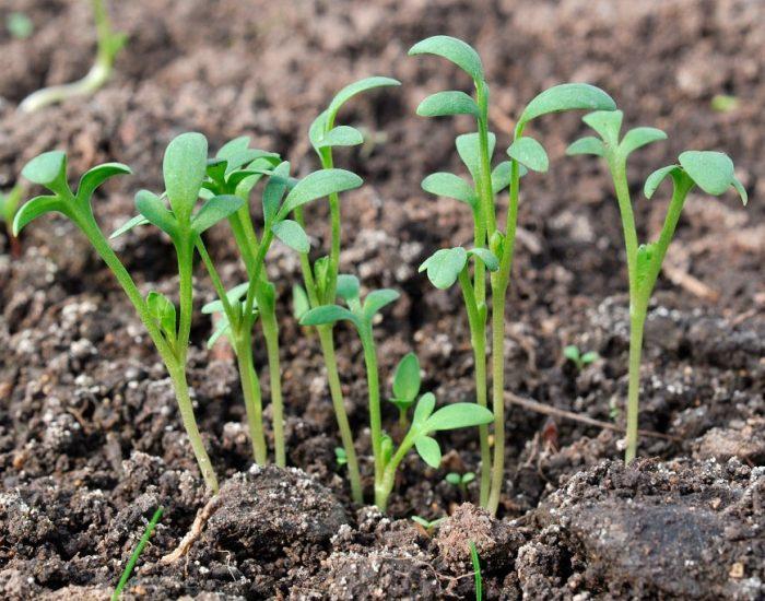 Основные правила выращивания