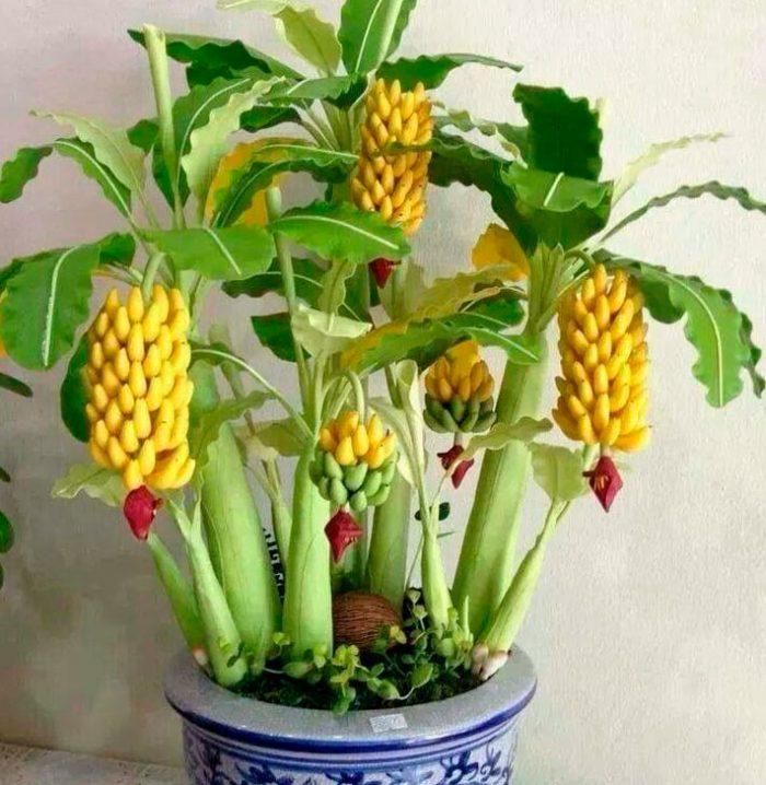 Домашний банан
