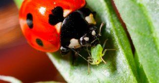 Полезные насекомые для сада