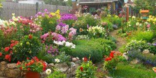 Лучшие многолетние цветы для дачи