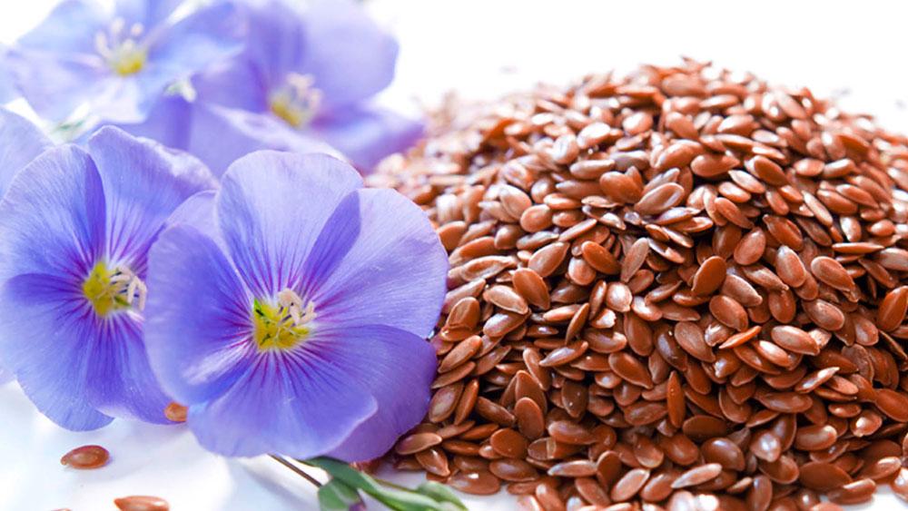 лен фото семена