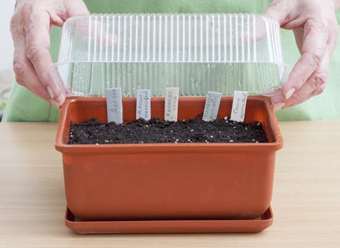 Как сажать семена бархатцев в открытый 916