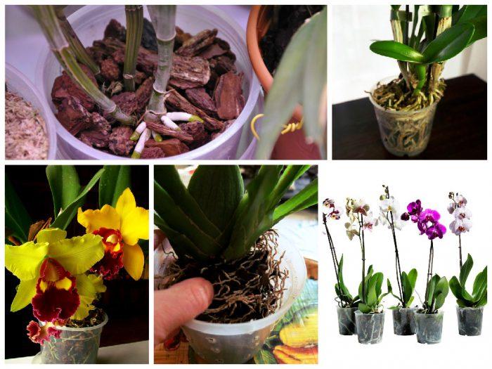 Как ухаживать за орхидеями в домашних условиях  492