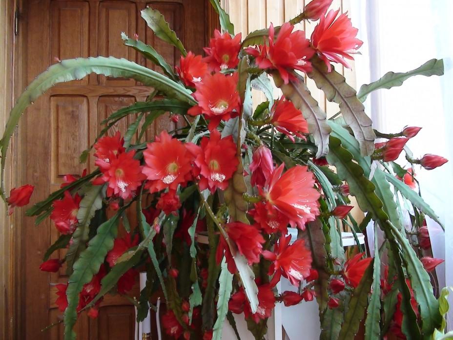 Суккуленты с красными цветами