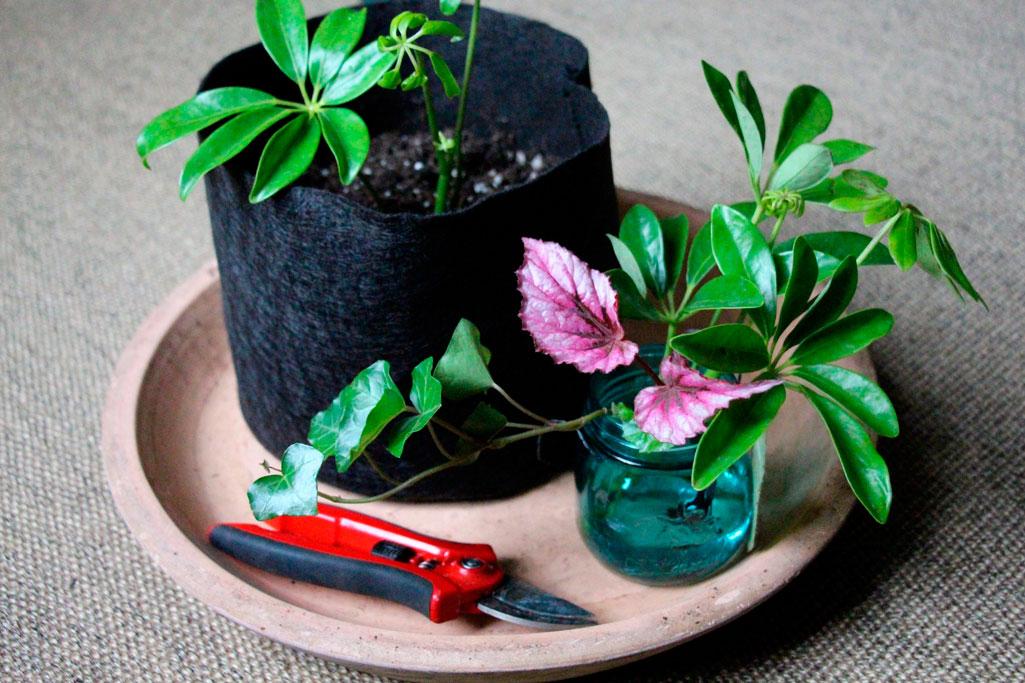 Комнатные цветы с уход и размножение